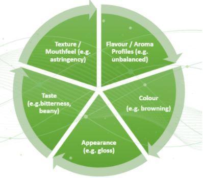 Sensory Attributes Alternative Protein Innovation