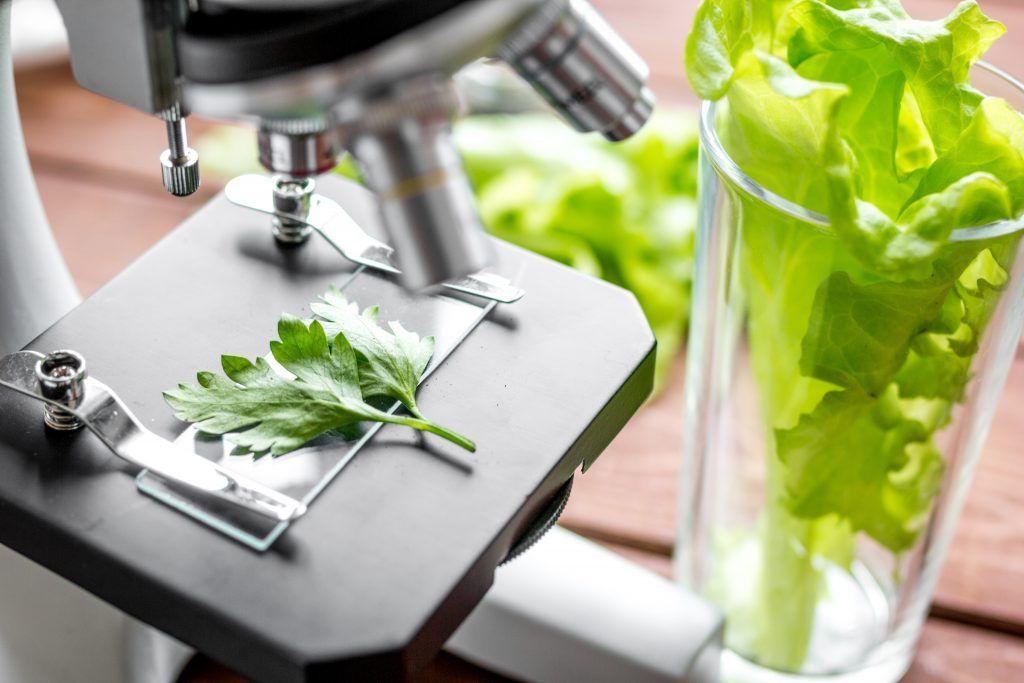 Botanical Ingredients Clean Label