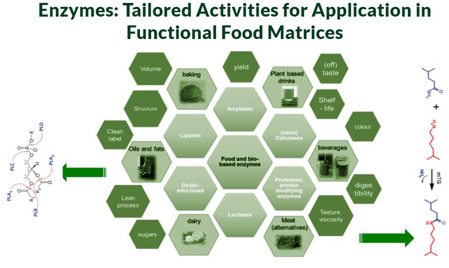 Food Enzymes Overview