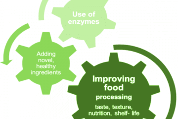 Food Enzymes Process